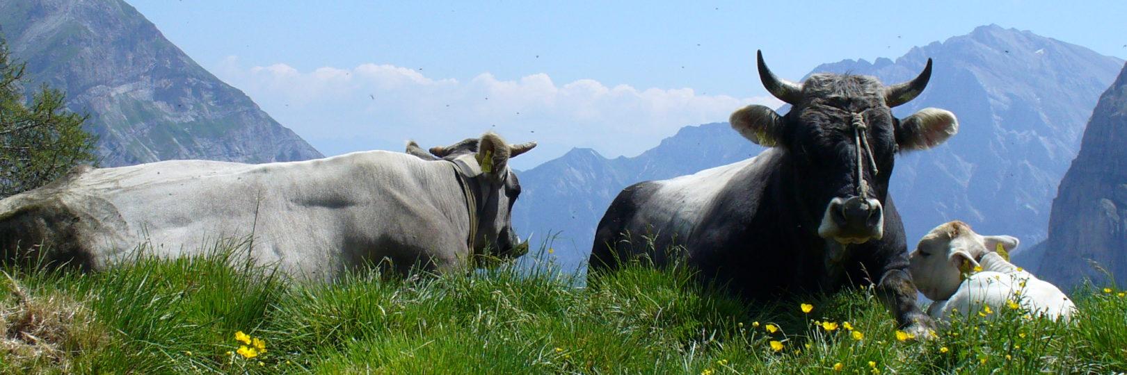 Beliebt Bevorzugt Bio-Rindfleisch vom Bauernhof #OV_44